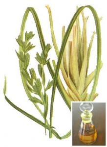 Citronella oil_lit