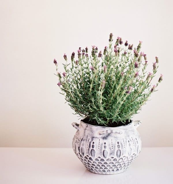 wedding-reception-decoration-ideas-potted-lavender-plant