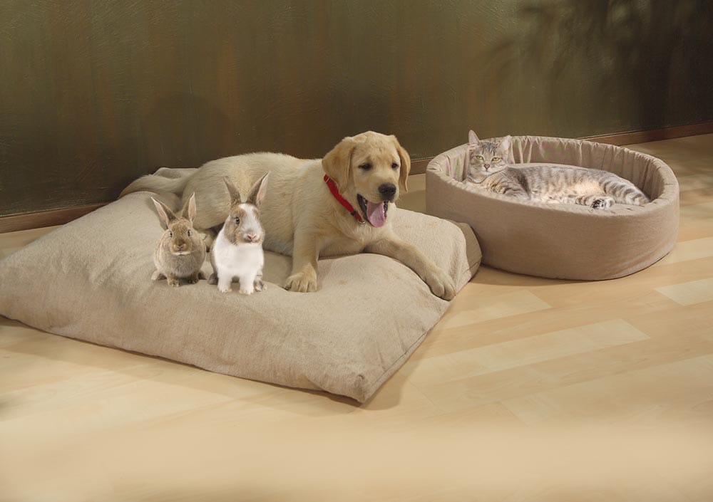 pet_bed_with_bunnies
