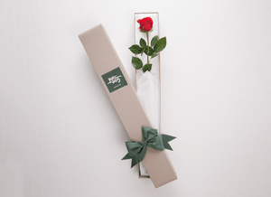 Single Red Rose Gift Box & Teddy Bear