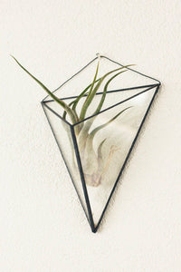 Geometric terrarium, hanging indoor planter