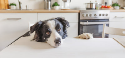 3 Unique Ways To Create A Pet-Friendly Kitchen At Home