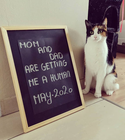 cat pregnancy announcement