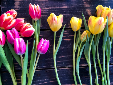 Cut Tulips in Red, Pink and Yellow on a black bench