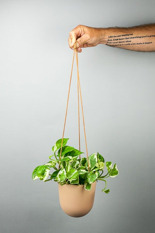 Hanging Capra Planter Solid from Green Fresh Florals + Plants
