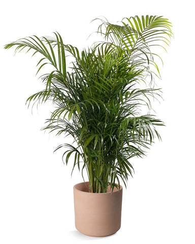 14 Por Houseplants & How to Keep them Alive – Green ... Names Of Green Houseplants on names of pests, names of wildlife, names of tea bags, names of design, names of corn, names of health, names of bromeliads, names of baskets, names of biennials, names of climbers, names of art, names of perennials, names of vines, names of gifts, names of gardens, names of greenhouses, names of water, names of soil, names of plants, names of hibiscus,