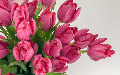 Pink Spring Tulips from Green Fresh Florals + Plants