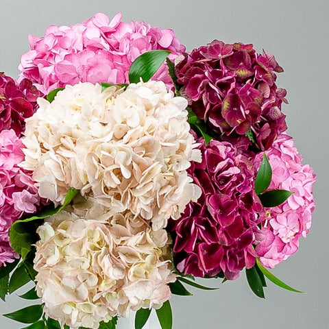 Pink, White and Red Hydrangea from Green Fresh Florals + Plants