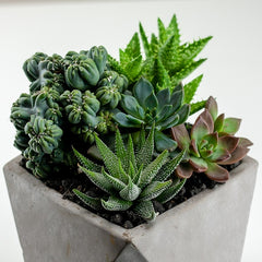 succulents and cactus in a concrete container