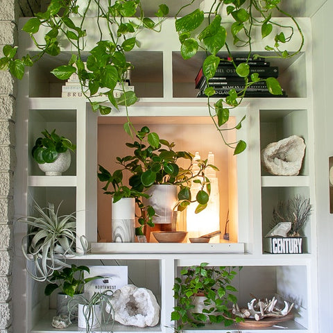 Tips For Styling Your Space With Plants Pots Green Fresh