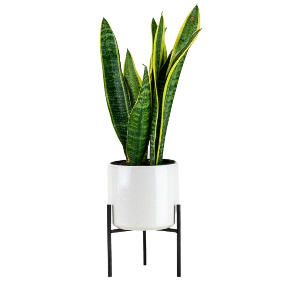 Black Metal Plant Stand with White Pot