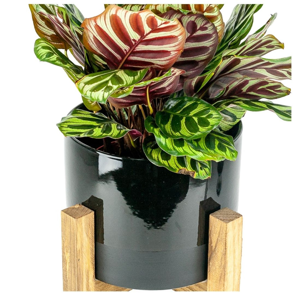 Two Tone Ceramic Pot + Wood Stand