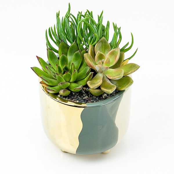 Gold + Grey Abstract Succulent Planting