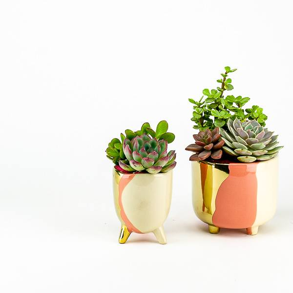Blush + Gold Succulent Planter
