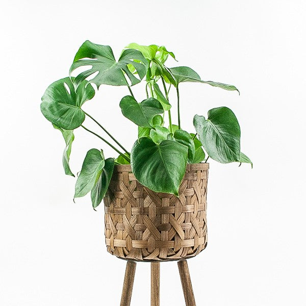 Woven Basket Plant Stand