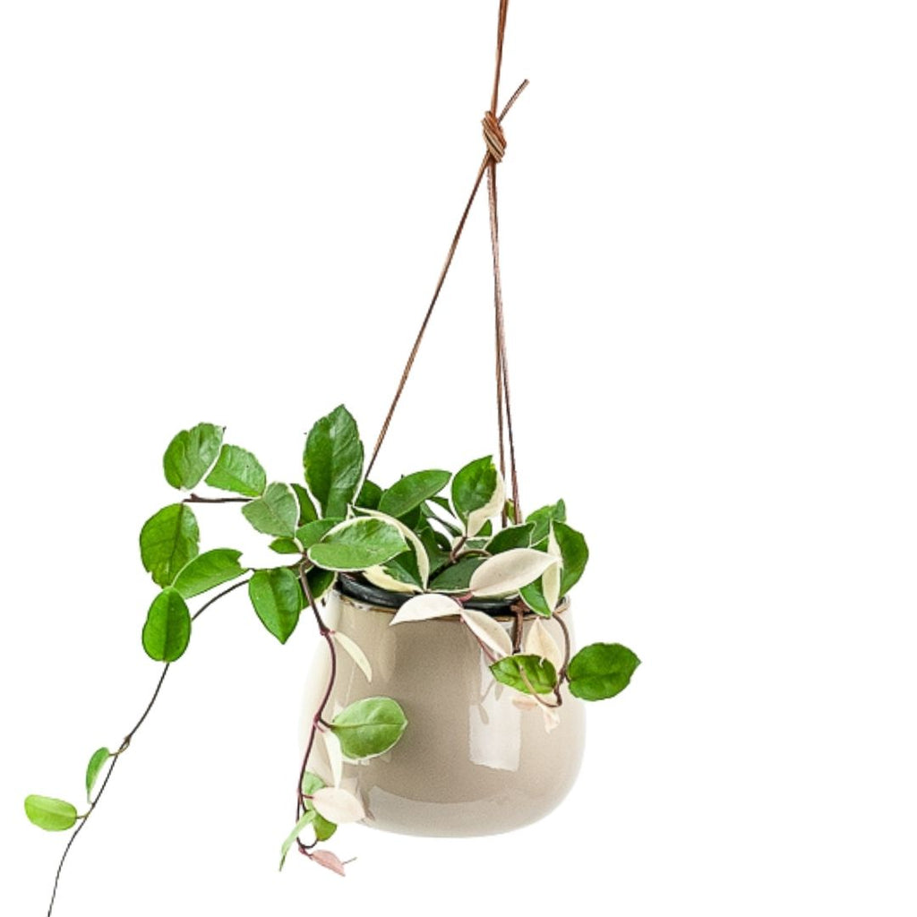 Lelay Hanging Planter