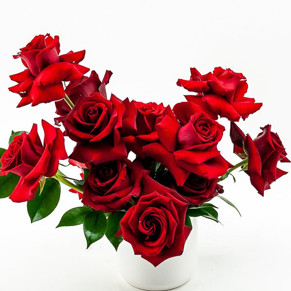 Red Rose Romance Floral