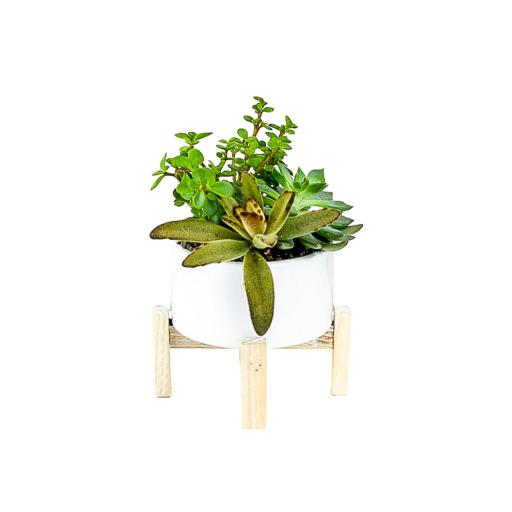 Succulent Planting with Wood Stand