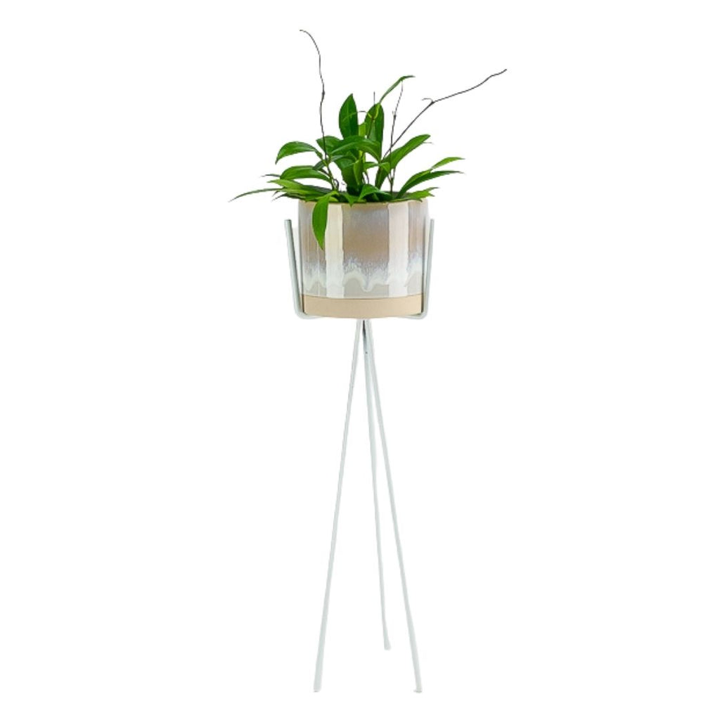 Cala Plant Stand + Pot