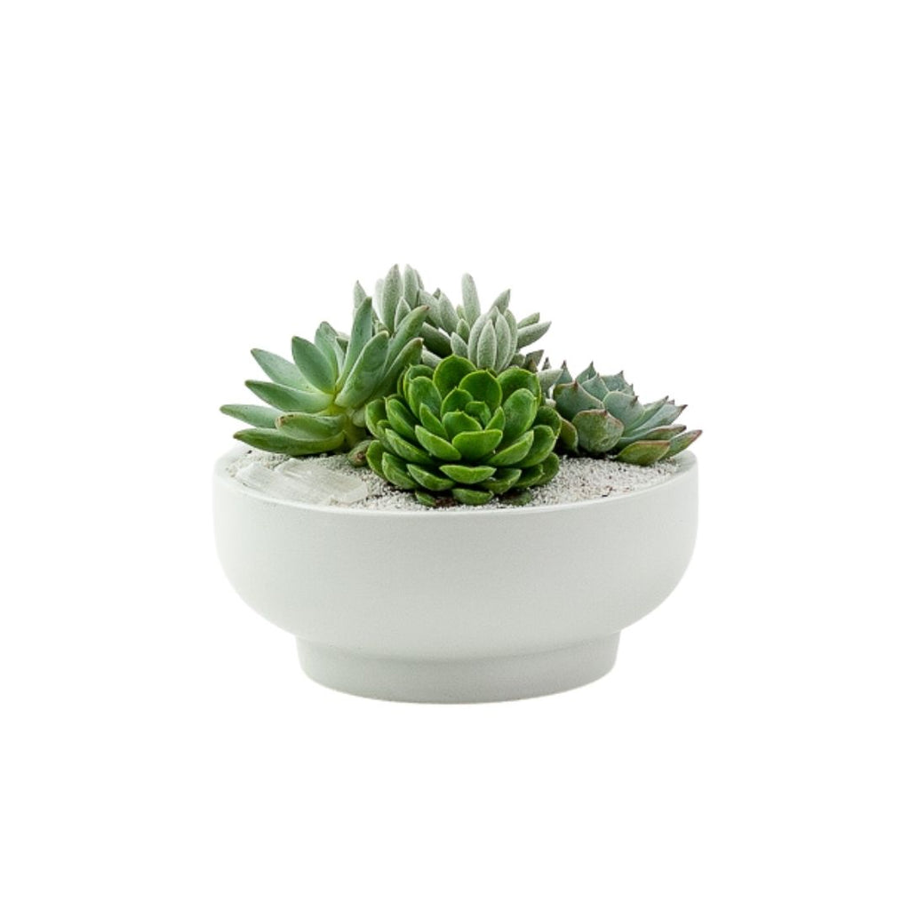 "7"" White Pedestal + Crystal Succulent Planting"