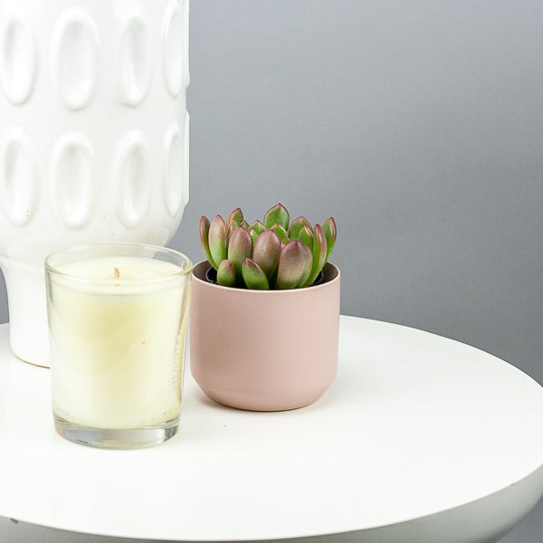 Pink Ceramic Pot with Succulent