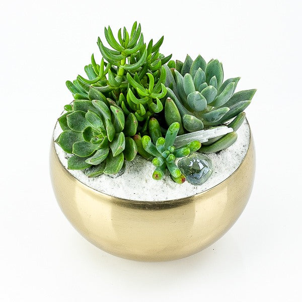 Gold + Crystal Succulent Planting