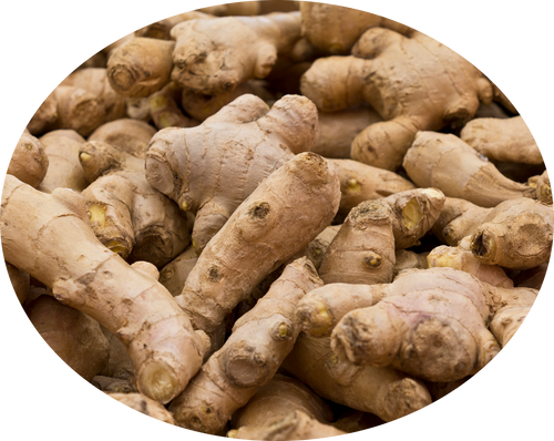 Ginger Dry (Zingiber officinale), Sounth Premium Quality