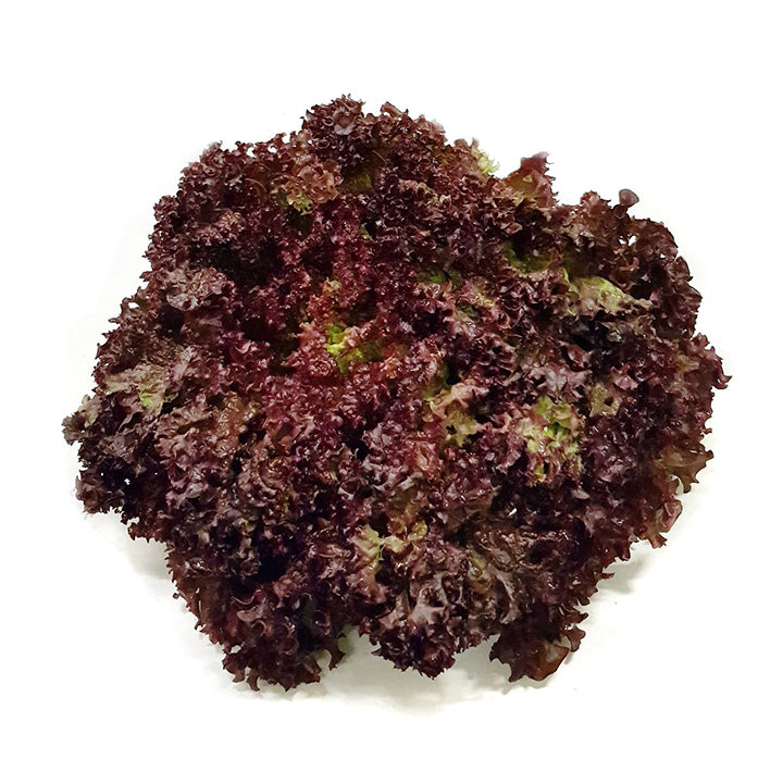 RED LOLO LETTUCE - 1 PC