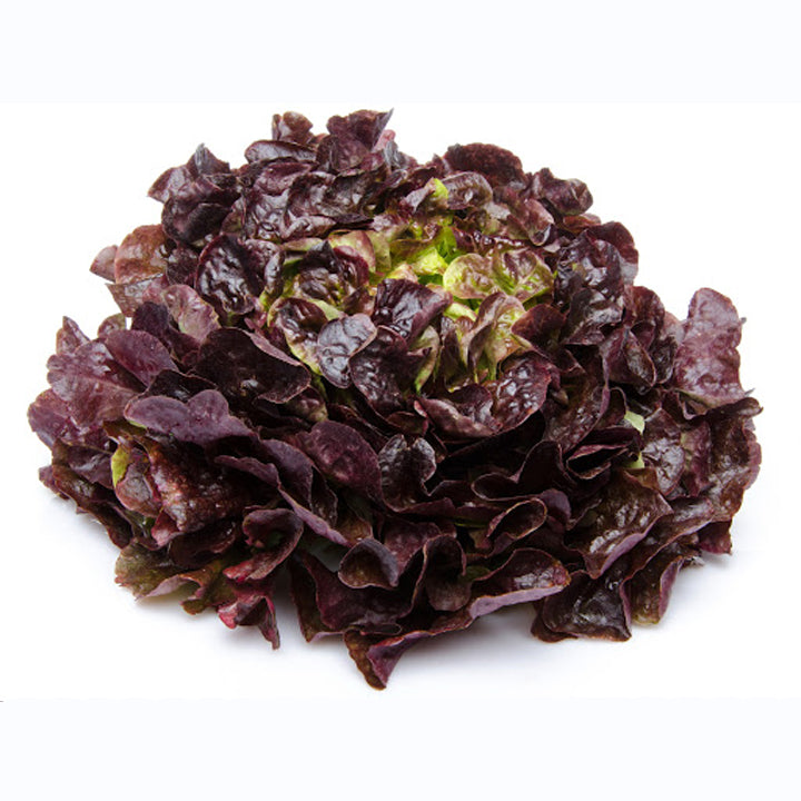 Red Oak Leaf Lettuce- aprox. 350g