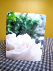 Card - White Rose