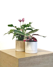 Load image into Gallery viewer, Cylinder Planters by Tiny Badger Ceramics