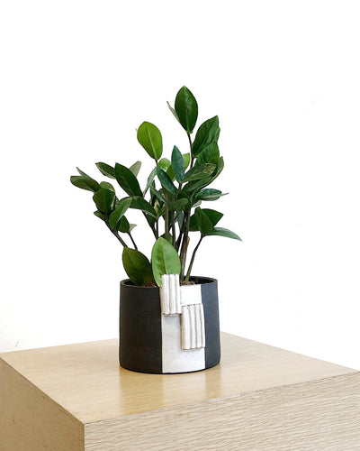 Cigarillo Planter by Salamat Ceramics