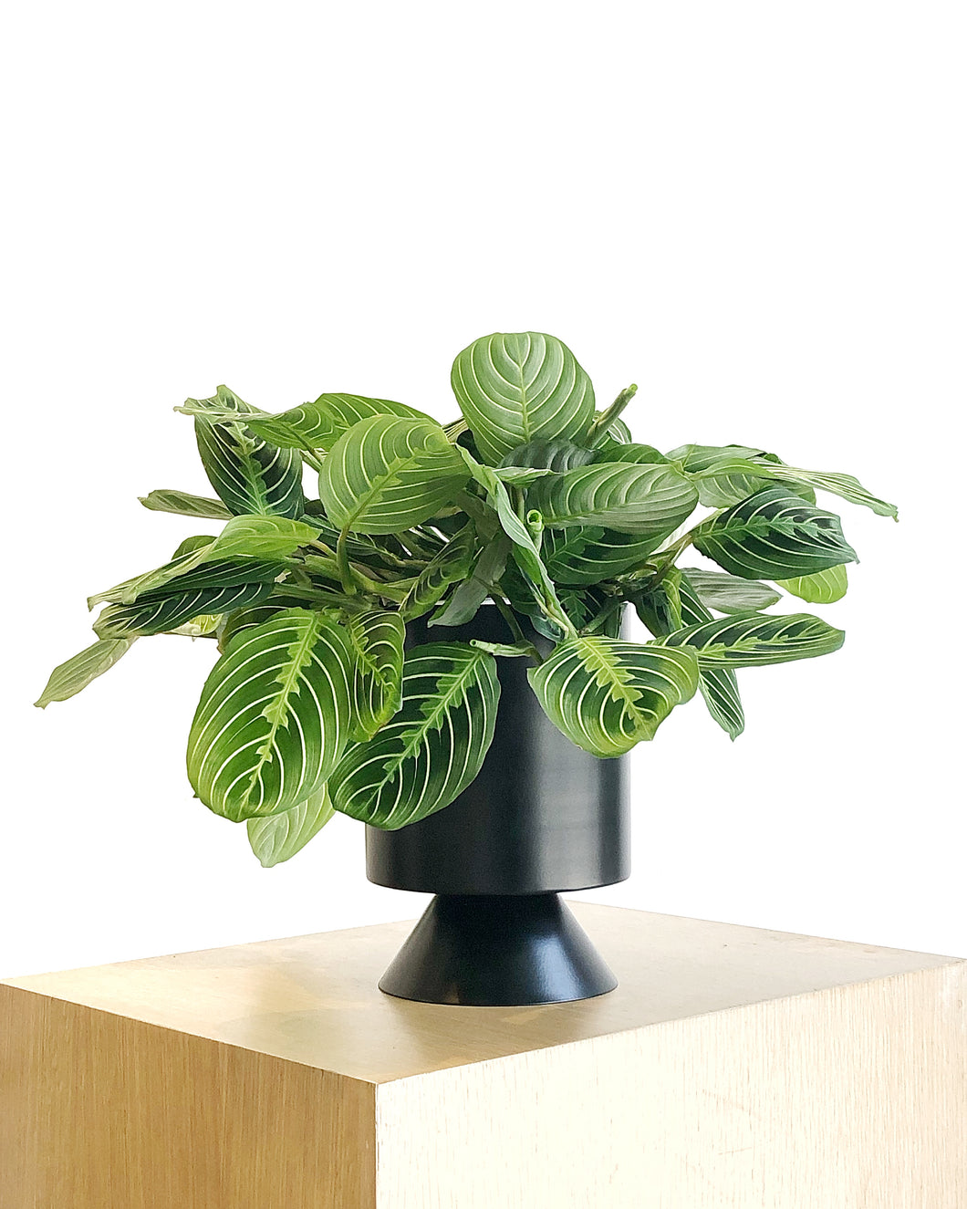 Palm Springs Planter in Black by Lightly