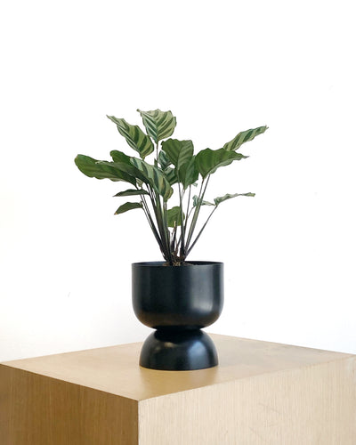Goblet Planter in Black by Lightly