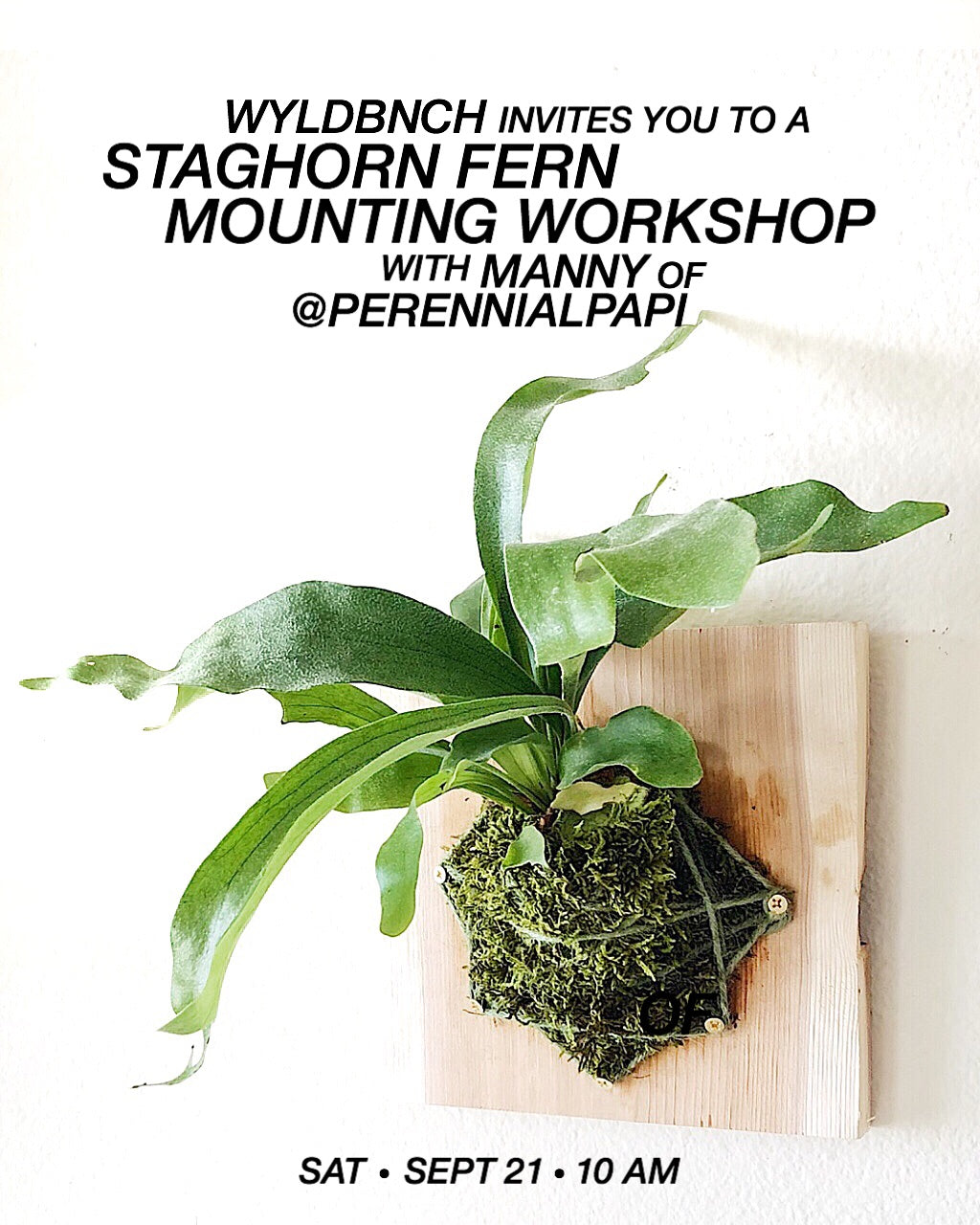WYLD Workshop: Staghorn Fern Mounting with Manny Soriano