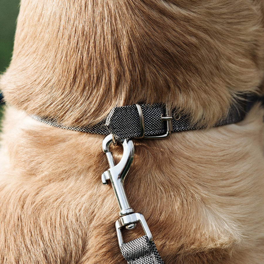Adriatic - Eco Dog Collar