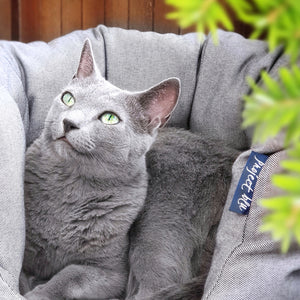 Grey Cat In Eco Friendly Cat Bed