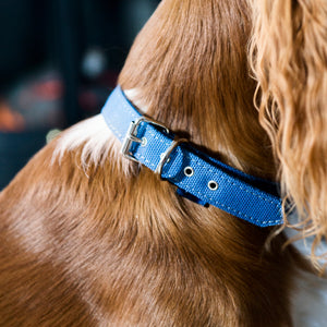 Zambezi - Eco Dog Collar