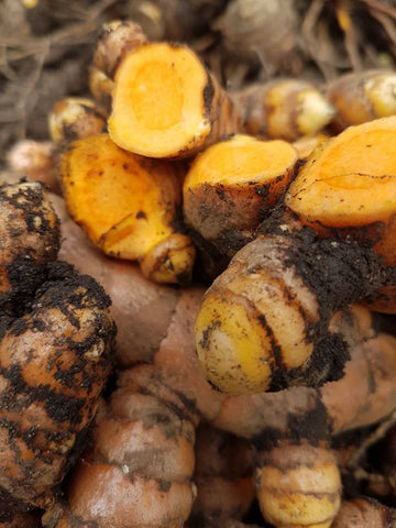 TURMERIC IS TERRIFIC! – Doug English
