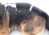 Heal your dogs injured tail tip with K9 TailSaver, and your dog will thank you because it's comfortable. Avoid risky and expensive docking, this is kind and effective. Its guaranteed or your money back.