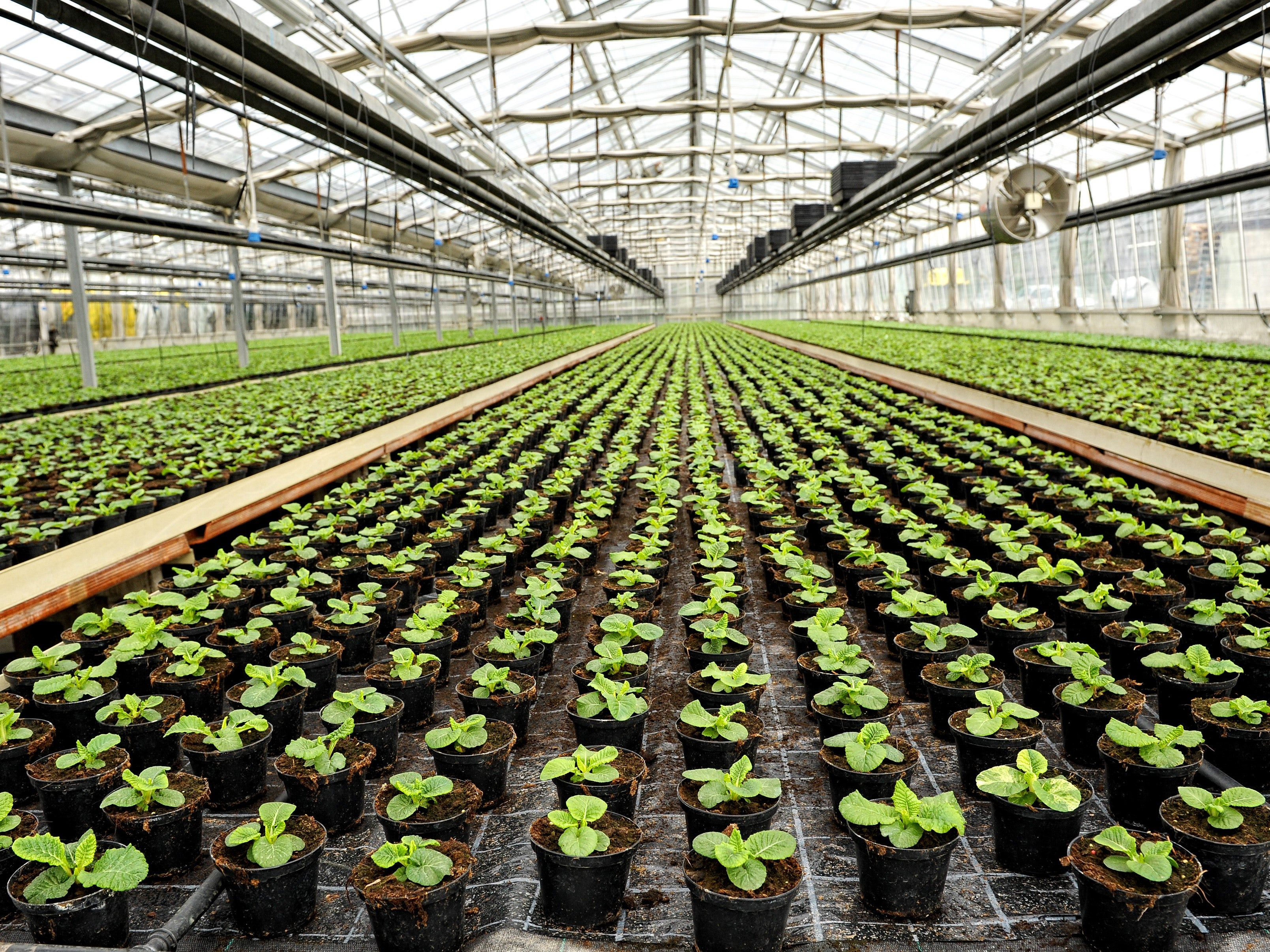 Pro-Gro and Greenhouse