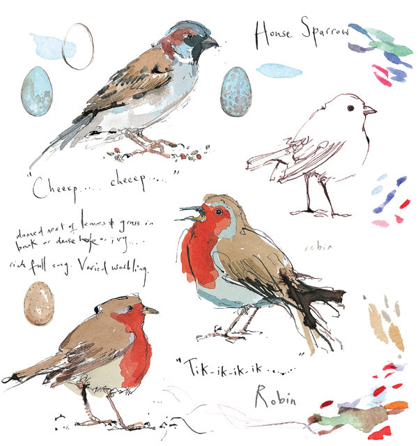 Sketch - Robin & House sparrow