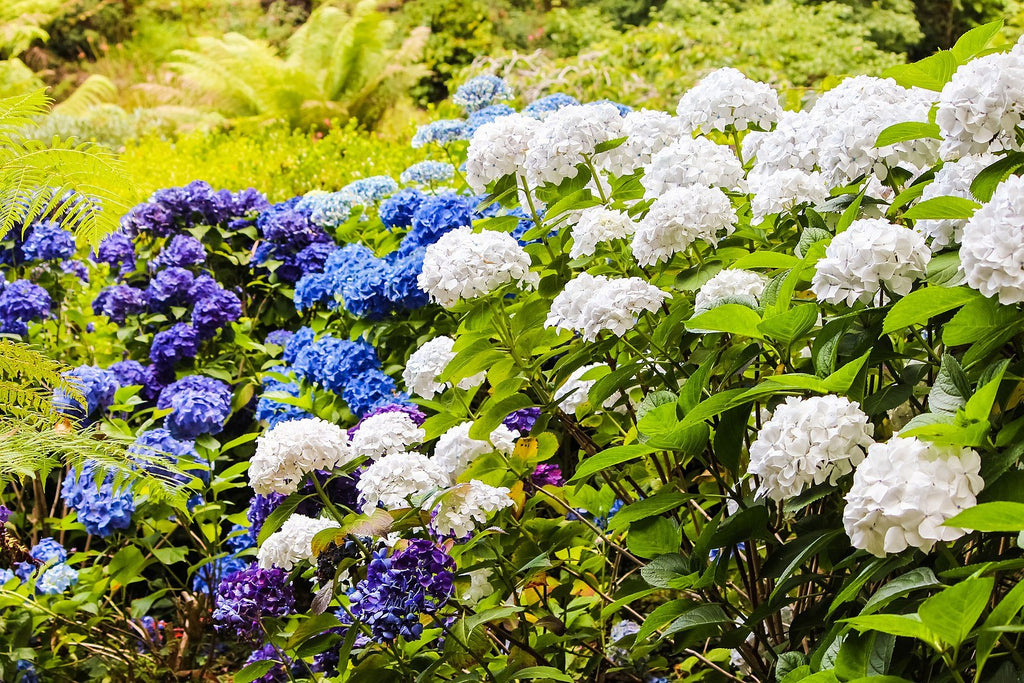 Summer Planting: Tips, Tricks and Benefits