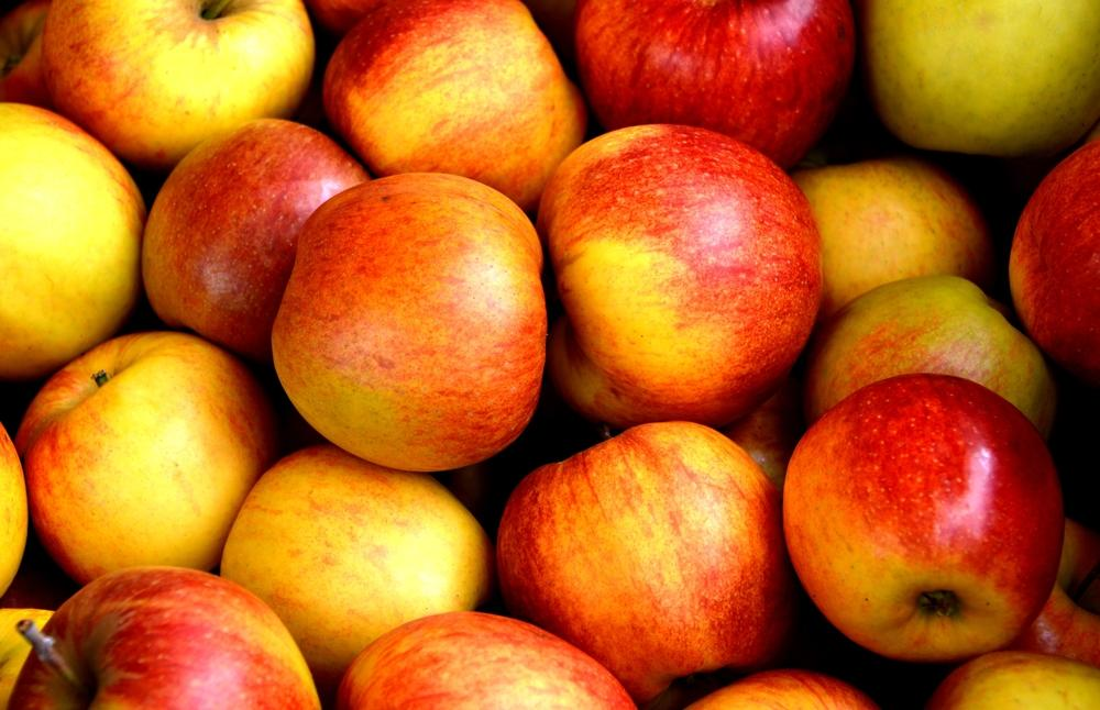 Apples on Apples: Our Top 5 Back-to-School Fruit Trees
