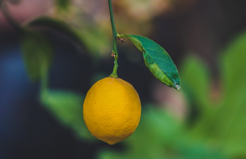 Lemon Trees: Everything You Ever Wanted to Know