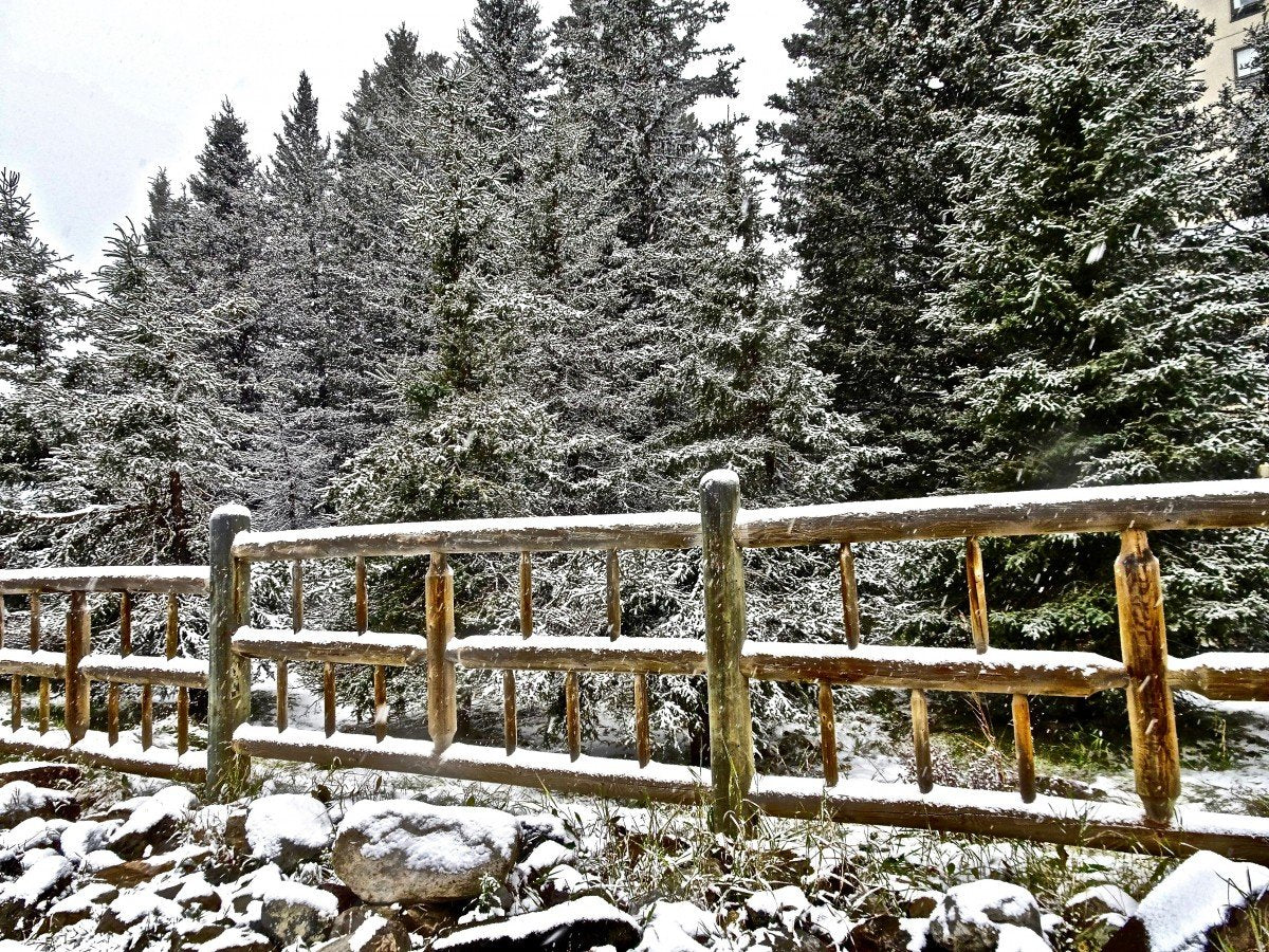 Winter Plant Protection for Evergreens