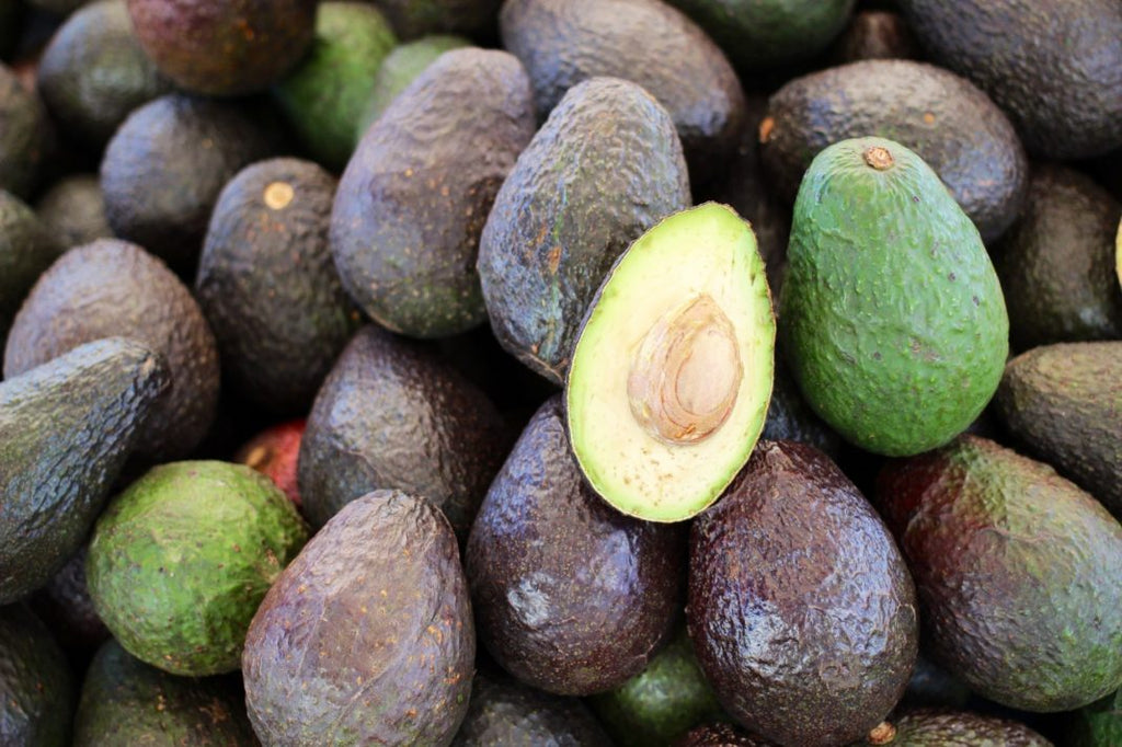 Plant Care 101: Avocado Trees