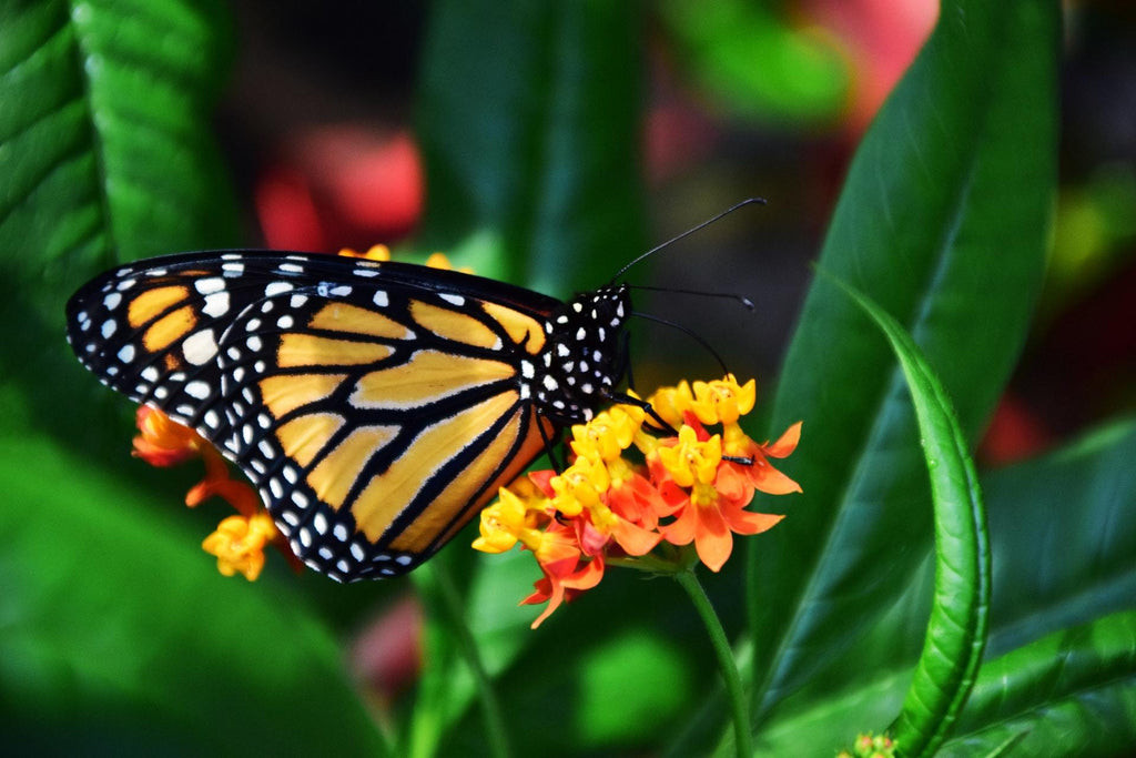 Butterfly Garden for Spring: Our Top 5 Tips