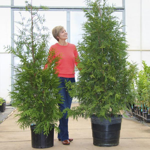 pam fast growing trees coupons