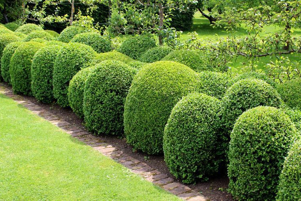 Evergreens for Hedging